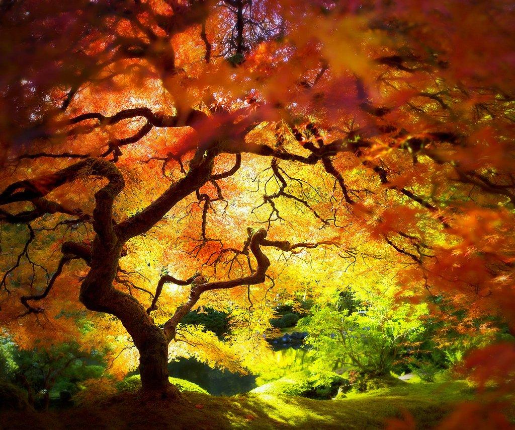 L arbre sans racine les champs d asphod le - Arbre sans racine envahissante ...